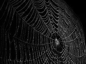 weaving webs