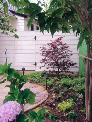 hydrangia shade