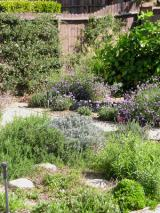 rock garden sustain